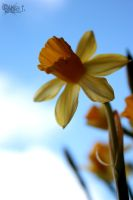 spring on my sill by LisaFPhotography