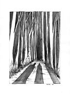 Forest Shadows by NoctiLuna