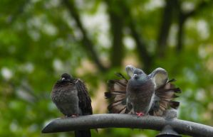 Doves by 0dyseusz