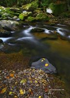 Contrasts of Autumn by TRBPhotographyLLC