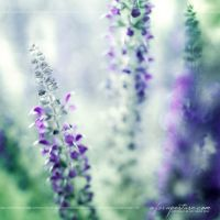 I Dream In Violet 7830 by AforAperture