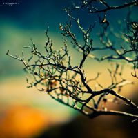 branches by oxygen2608