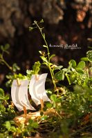 .Paper Sails. by KimberleePhotography