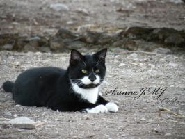 2012 Leftover:  'Looking So Handsome' by siannajmj