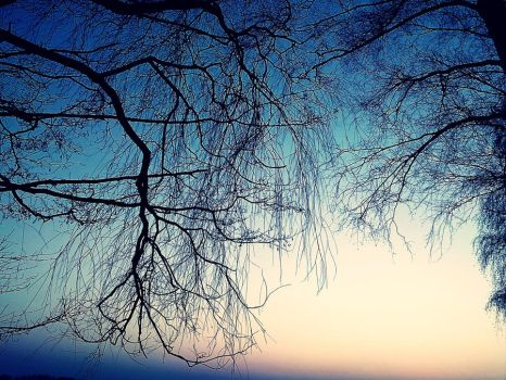 Branches in sunset by Ma-Verite