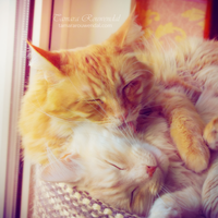 Brotherly love by TammyPhotography