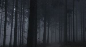 Dark Forest by PassionAndTheCamera