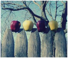 apples on a fence post by Nekopie