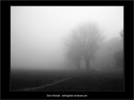 Foggy trees by Ph1at1ine