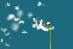 dandelion_seeds_being_blown by wahyuprot