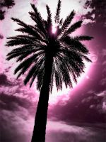 Palm Tree by Visibl3