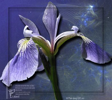 Iris by libidules