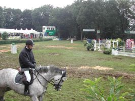 Competition horse 8 by Stock-gallery