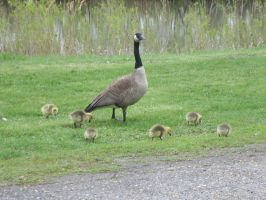 Goose and Babies by MadForHatters