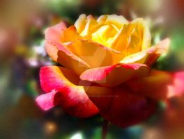 Chicago Peace Rose by DawnellasArtworks
