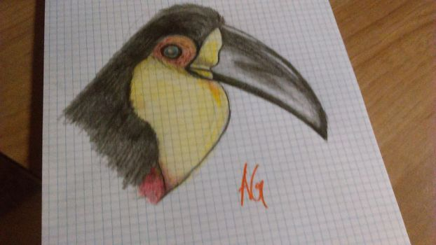 Toucan - Colored Pencil by SonicXhalofan