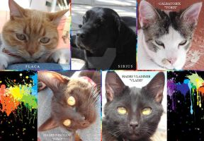 Pet Collage by goldaries711