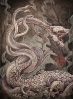 Hydra by CaitlinHackett