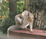 Itchy Squirrel Series - 4 by Gymnart