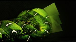 Green Snakes desk wall by Veves