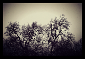 Tree Tops by Mellowbeauty