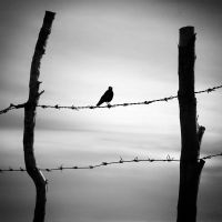 songs from freedom by QUEEN-OF-LONELESS