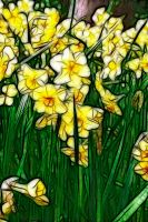 Daffodils by Bazz-photography