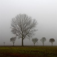 Mist in the Po Valley by MarioDellagiovanna