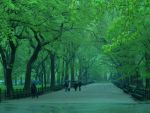 Central Park. by blacktjay