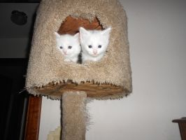 Kittens in a cat tree 2 by ulyferal