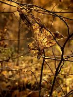 gold II by narare