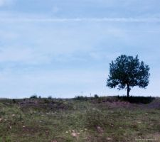 Lonely Tree 6 by Iulia-Oprinesc