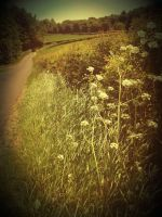 On the road side by josephinebruce