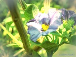 Purple-Blue Flower .. by oOFallenAngellOo