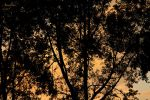 Silence is Golden by Amalphi