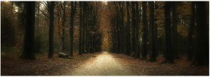 Autumn road ... by MOSREDNA