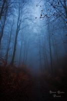 Durch den Nebelwald by ArkanumTenebrae