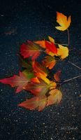 Autumn.....0 by gintautegitte69