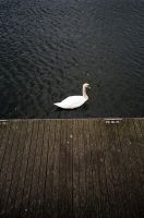 Into a swan by maria-ana-m
