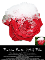Frozen Rose PNG by CD-STOCK by CD-STOCK