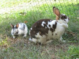 Rabbits: stock by Lythre-does-photos