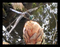 DragonFly around pond by checkingthecheese