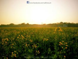 Field of Flowers by SukhRiar