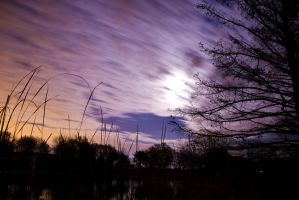 Moonlit Sillouette by MikeDaBadger