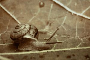 Snail on a Leaf by me-dumb