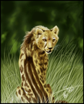 King Cheetah by ArtistMaz