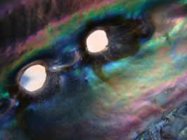 Abalone_1 by whipzter