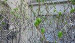 New leaves_4 by Sparia