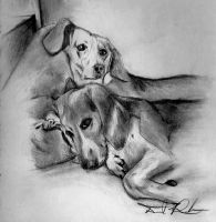 Chuey and Chico by snow1