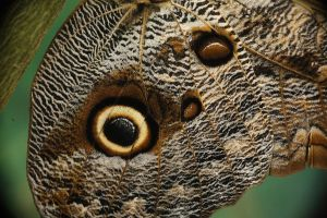 Butterfly wing by Dadstock